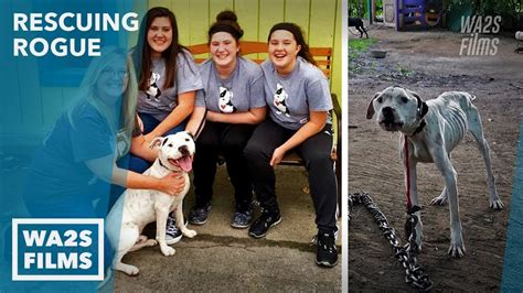 Amazing Transformation of Chained Starving Rescue Dog