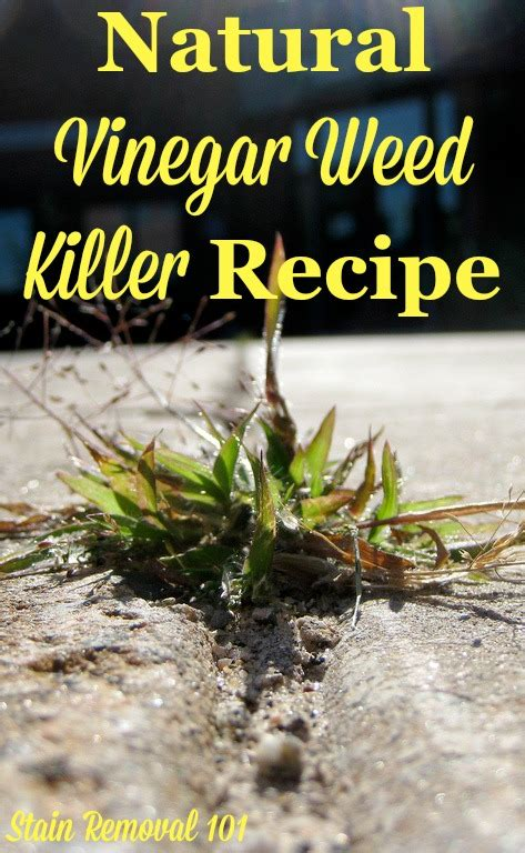Natural Vinegar Weed Killer Recipe {Simple & Frugal}