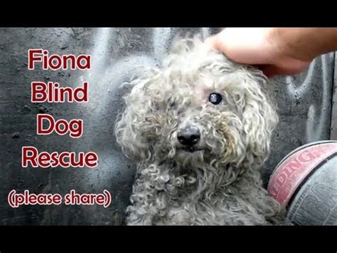 Blind dog rescue: Fiona - Please SHARE on FB & Twitter and