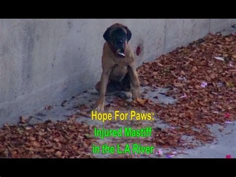 Hope For Paws and the L