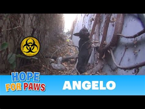 Hope For Paws: Angelo - a homeless dog living in a trench